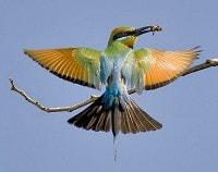 Colorful bird wings spread
