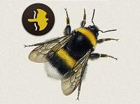 Bumblebee field guide app released