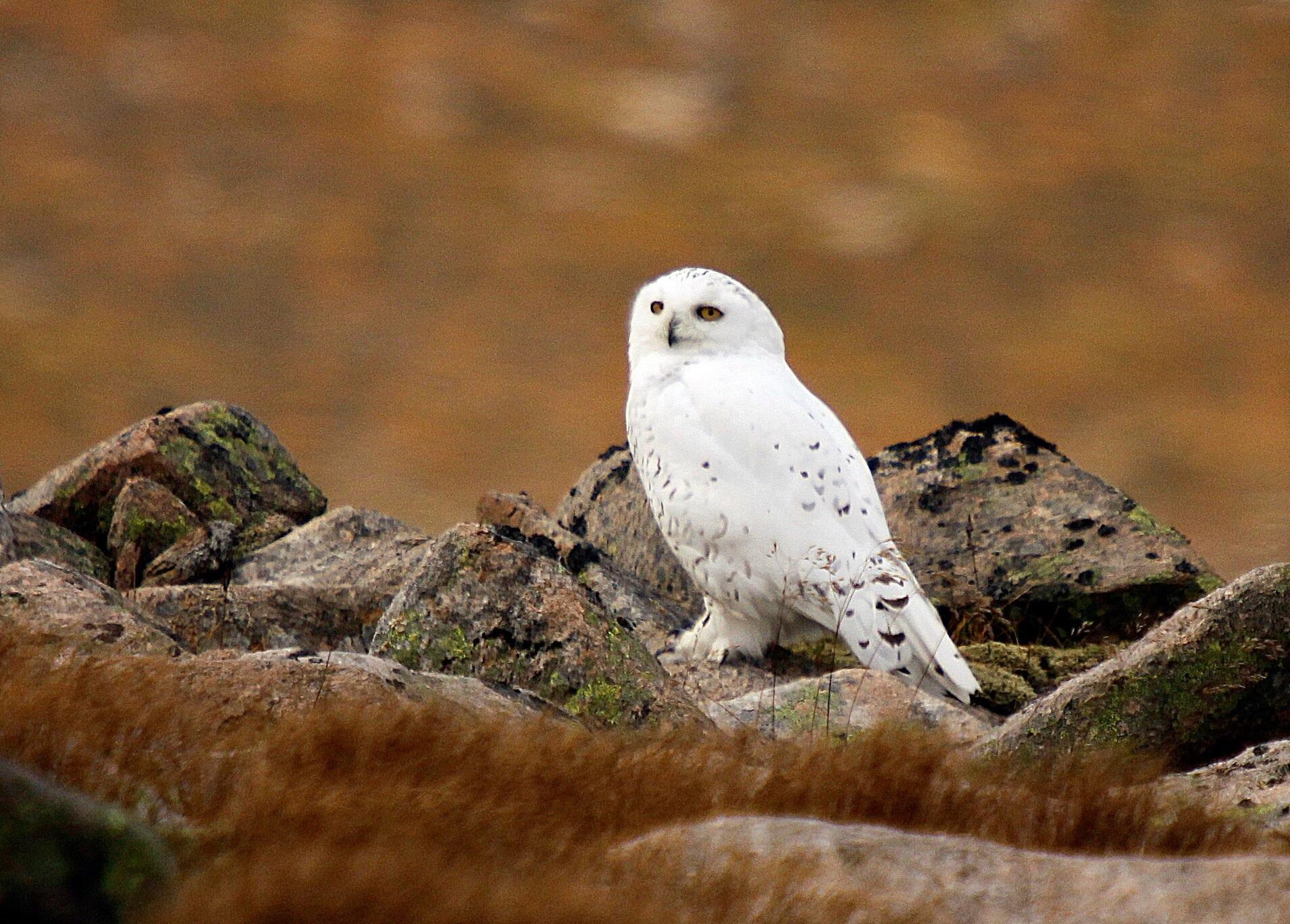 Northern Virginia Birds  Prince William Conservation Alliance
