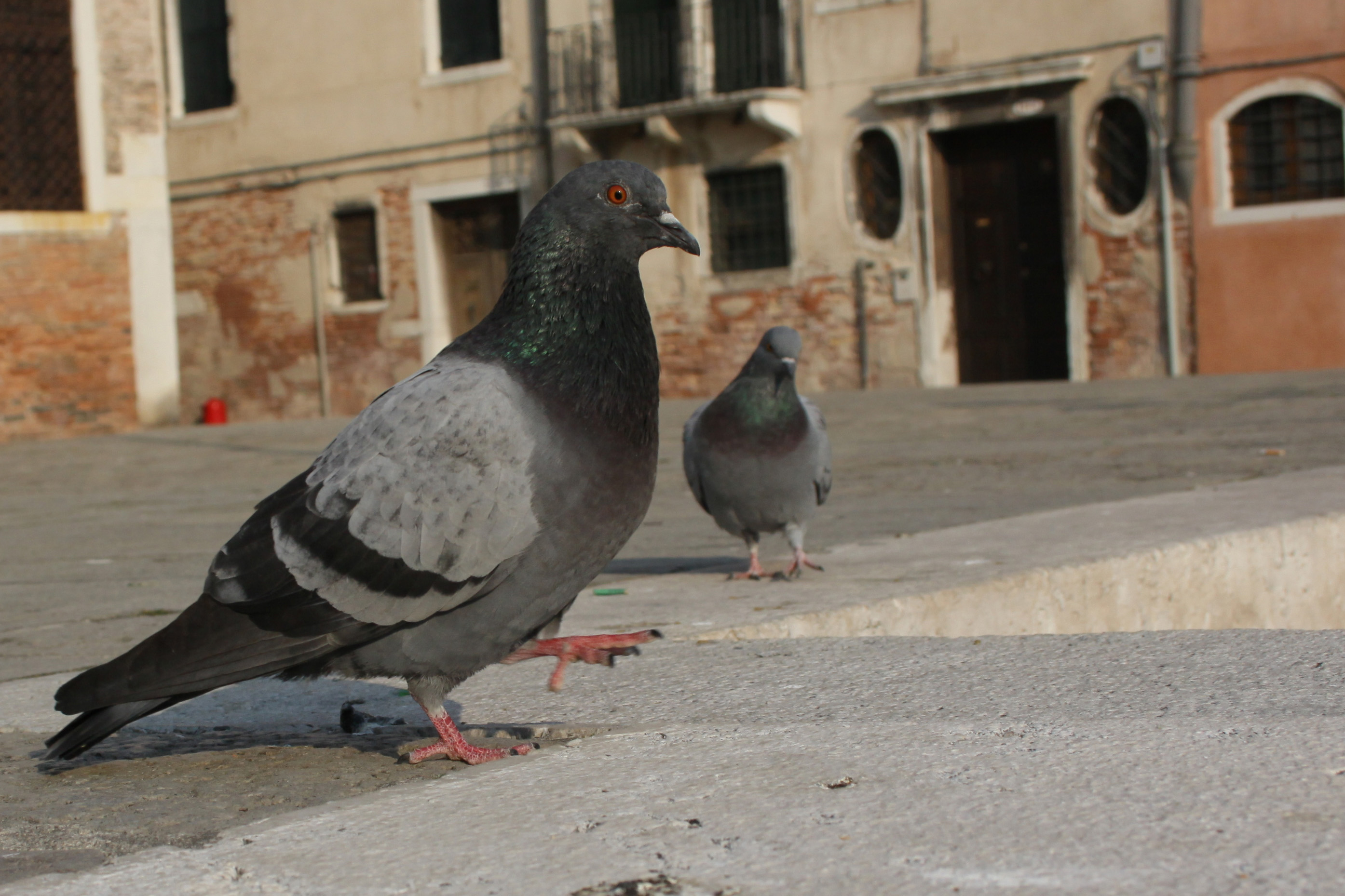 Spanish city to relocate thousands of pigeons