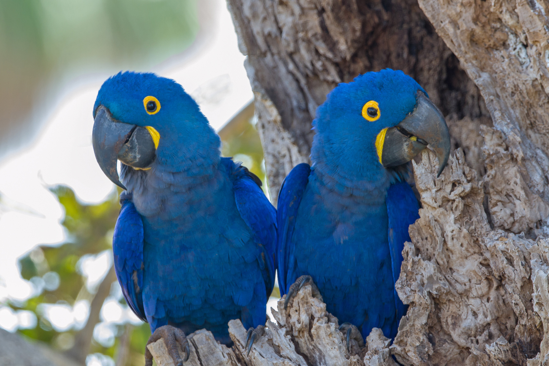 South American bird trade reaches lowest level in decades