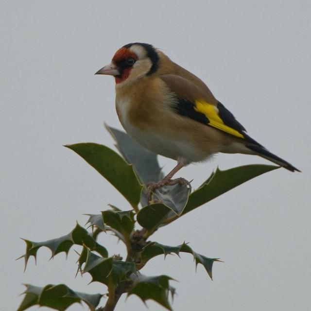 Birdforum
