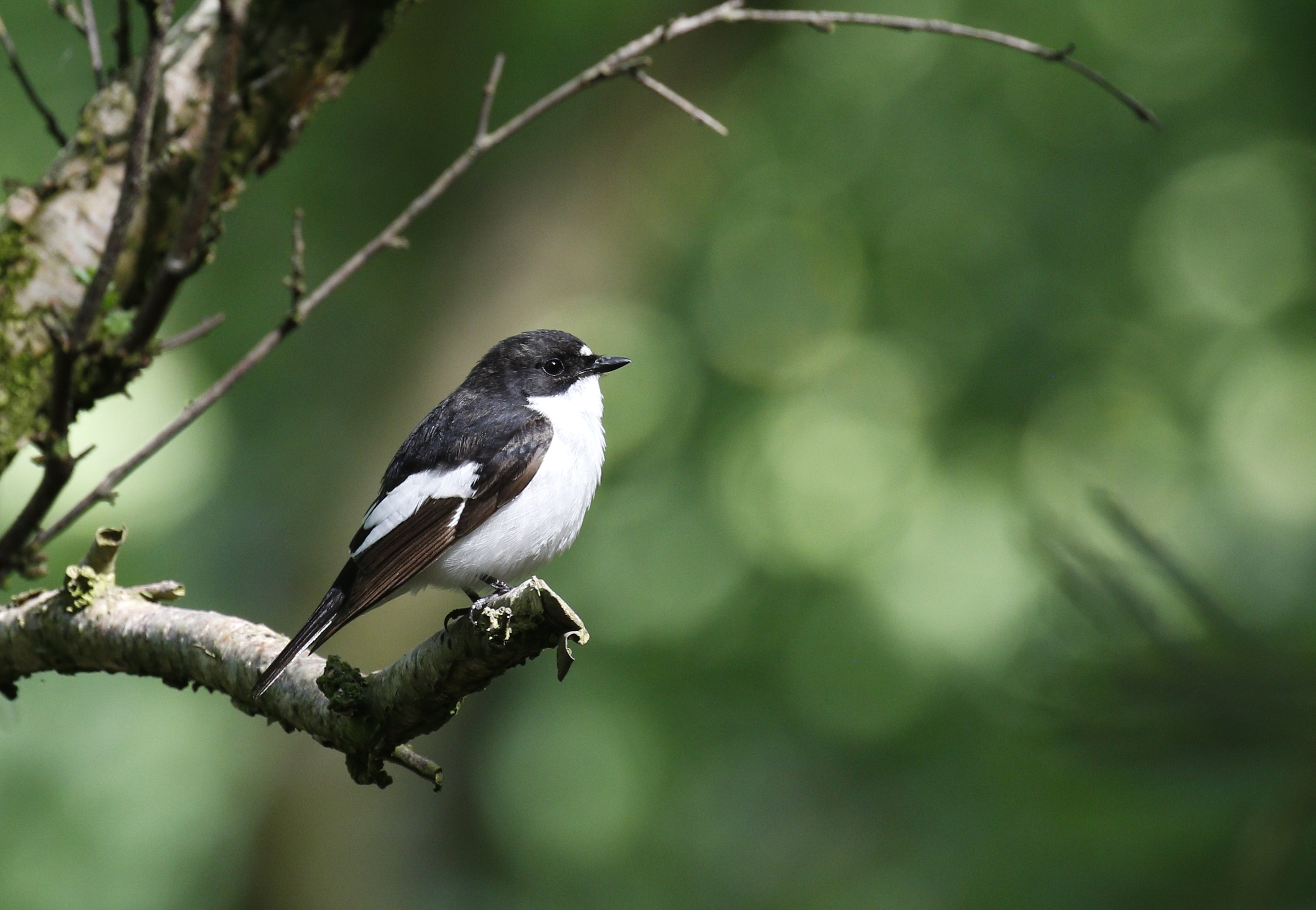 Grant set to boost Welsh woodland birds