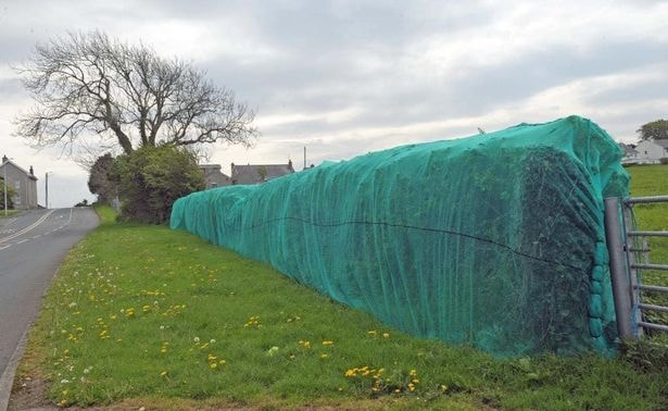 Anti-bird netting only for 'exceptional circumstances', says Welsh housing minister