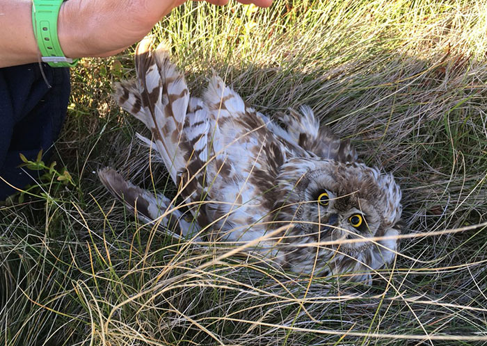 Owls gunned down in Peak District