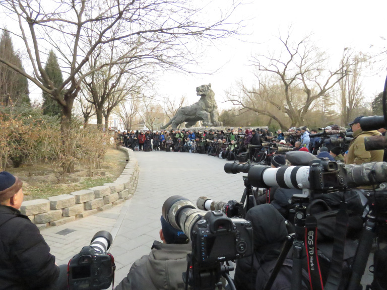 Robin causes a stir in Beijing