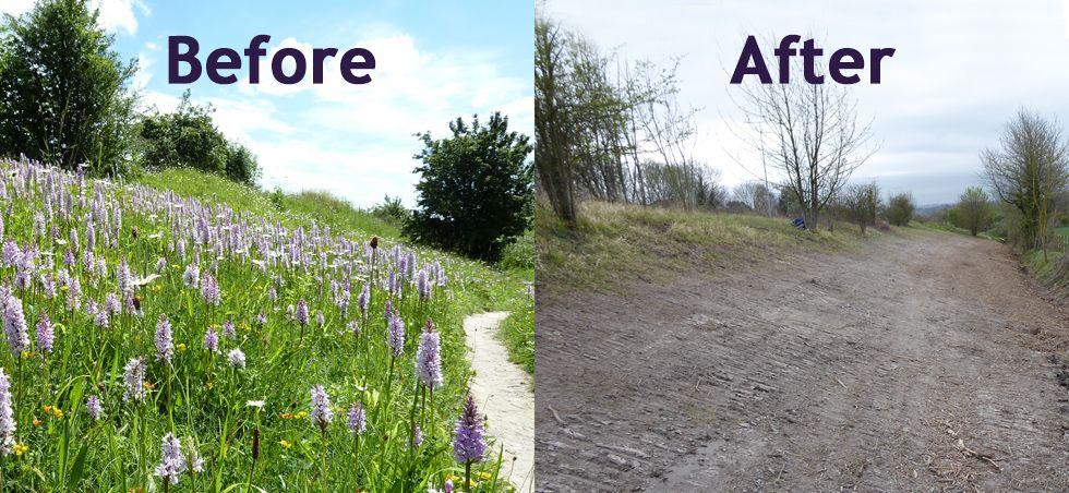 Council accidentally bulldozes roadside nature reserve