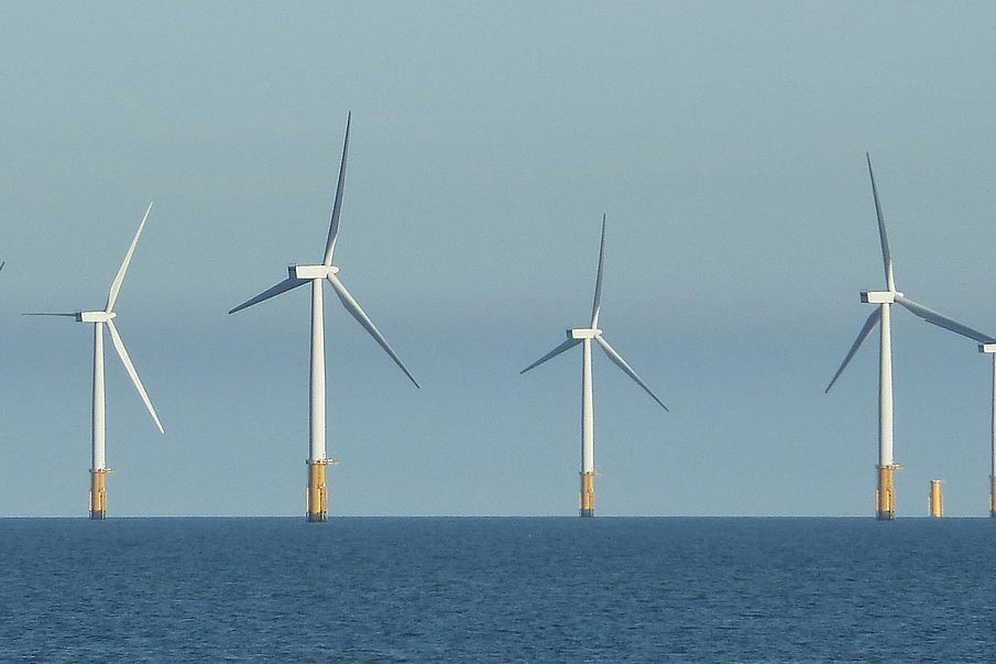 Call for action to reduce offshore wind impacts on wildlife