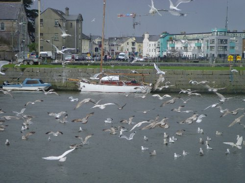 Nimmo's Pier, Galway March 2008 (Photo: Richard Bonser)