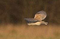 Barn Owl Diaries Part 1: Rushcliffe Barn Owl Project