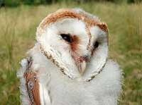 Barn Owl Diaries Part 5