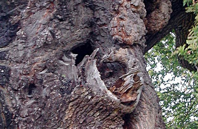 Close up of nest hole