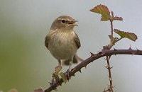 Birding by Sound Part I