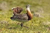 Birding by Sound Part III