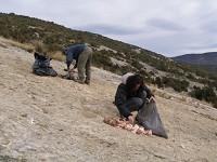 Birding abroad Vulture feeding stations in the Sierra de Guara