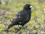 Articles Rob Martin catches up with the Winterton Black Lark