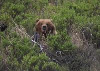 Birding abroad Alaska - the last frontier