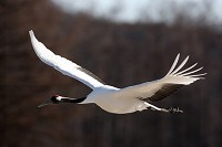Birding abroad The Cranes of the DMZ