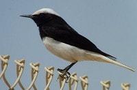 Birding abroad Spring Migration in Israel
