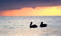Birding abroad Florida photo-fest