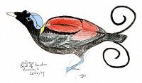 Birding abroad Papua New Guinea: Part II