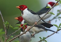 Birding abroad The Pantanal: birding paradise