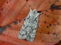 Moths of the season March to early April