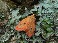 Moths of the season July