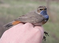 Birding abroad Ringing and birding in Catalonia: part I