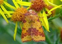 Moths of the season Autumn