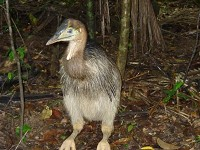 Birding abroad Antipodean adventure
