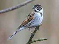 BTO Garden BirdWatch annual results
