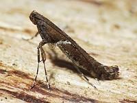Moth News Winter moths 2010 - 2011