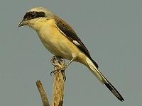 Birding abroad Revisiting India