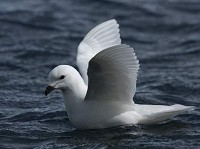 Birding abroad Wildlife of the Antarctic Peninsula, Drake Passage and Beagle Channel - part 2