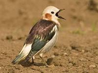 Birding abroad Birding the Kurils & Commander Islands: part 1