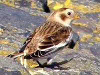 Birding abroad A taste of Texel