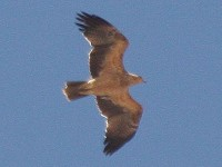Birding abroad Portugal – an overlooked birding destination?