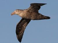 Birding abroad The South Atlantic Ocean