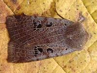 Moth News October–November