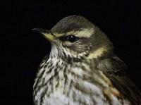 Birding abroad Nocturnal Offshore Birding