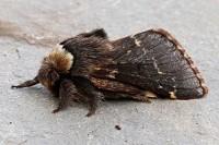 Moth News November–December