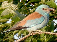 British Birds Trust approves grants totalling £6,000