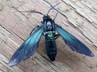 Moth News Midwinter