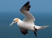 Research Scientists predict where seabirds forage
