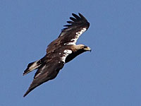 Extremadura diary March 2012
