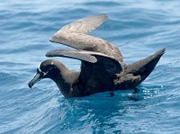 Birding abroad a Cape pelagic