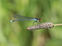 British Dragonfly Society Year of the Dragon