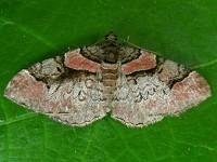 Moth News June update