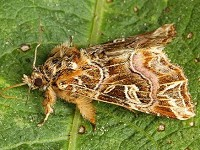 Moth News Mid-summer Review